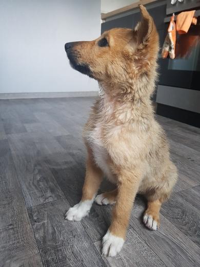 Найден щенок, фото 4