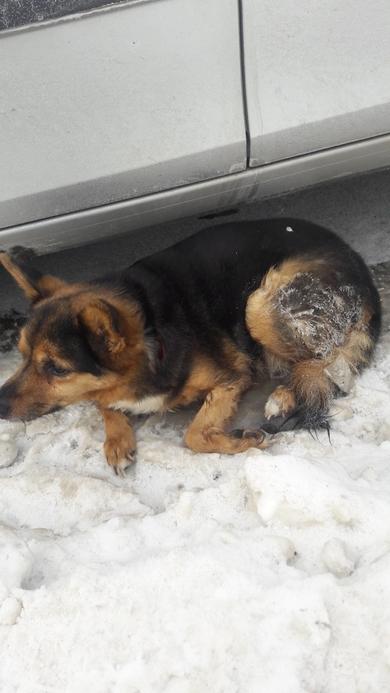 Замерзает пес