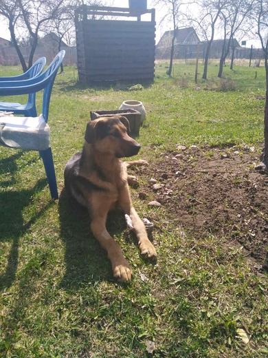 Собаке нужен друг и хозяин, фото 3