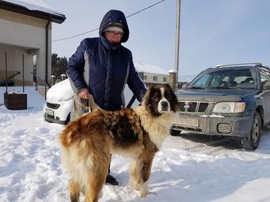 Кавказская овчарка найдена