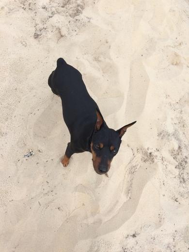 Борисов потерялась собака, фото 2
