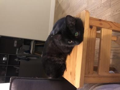 Пропал кот, проспект Дзержинского 9, фото 2