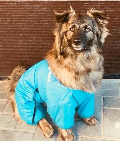 Красивая собака в дар