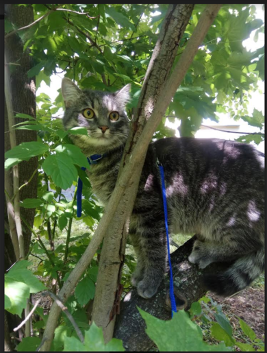 Потерялся кот!  ул.Янки Мавра д 3