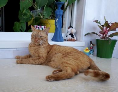 молодой рыжий котик ищет дом, фото 2