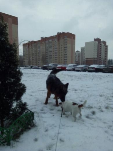 В военном городке Уручье. ул 50 лет Победы. Видели сегодня крупную собаку, свободно гуляющую. Ошейник на ней. К людям подходит. Не агрессивная., фото 4
