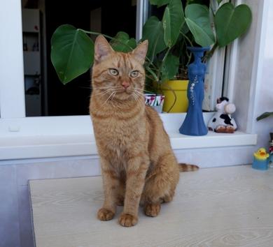молодой рыжий котик ищет дом