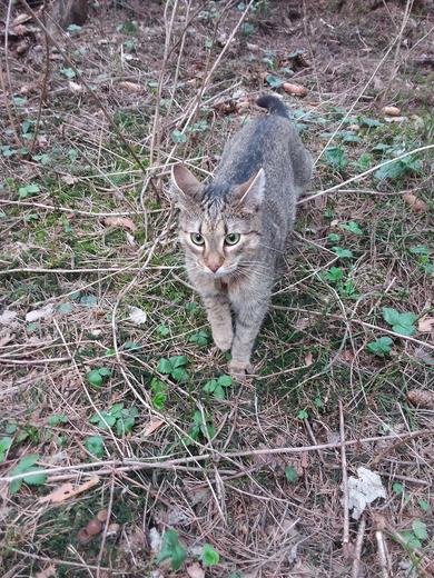 В Уручье потерялся кот
