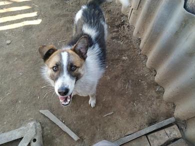 Рокс пес-подросток ищет новую семью