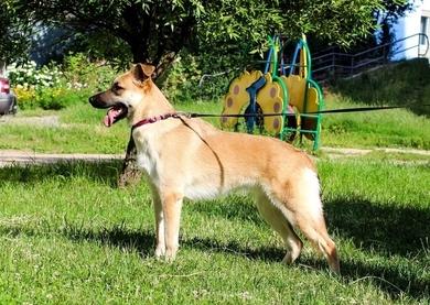 Молоденькая собачка  ищет дом, фото 4