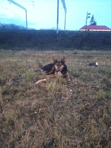 Найдена собака с зеленым ошейником
