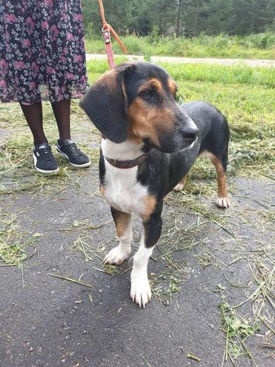 Найдена собака в Колодищах, фото 2