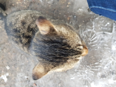На ул. Монтажников появился кот, фото 3