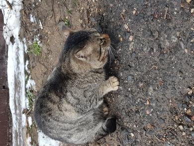 На ул. Монтажников появился кот, фото 2