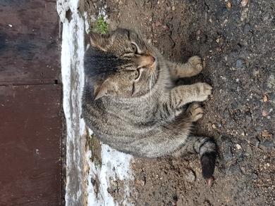 На ул. Монтажников появился кот