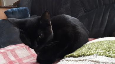 пропала кошечка 6-7 месяцев. черная