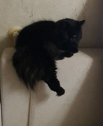 Потерялась кошка, фото 2