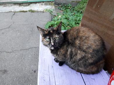 Найден кот(кошка)