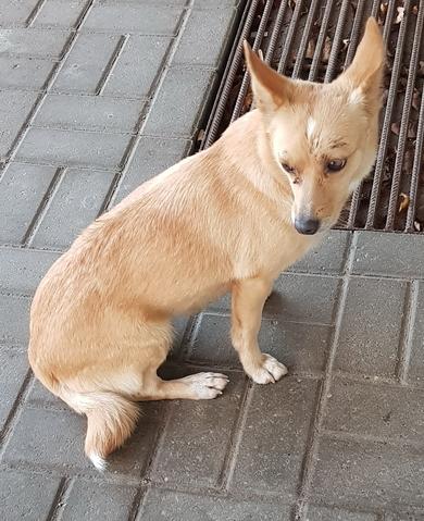 Маленькая рыжая собачка ходит одна, Уручье, Военный городок
