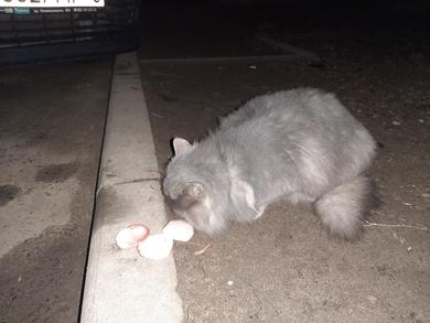 Найден кот на Пушкинской