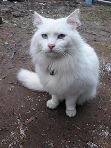 найден молодой кот-в районе Обл.больницы -дер.Городщина., фото 2