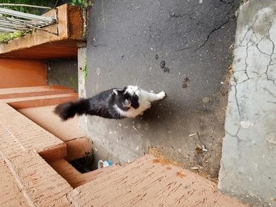 Прибился кот