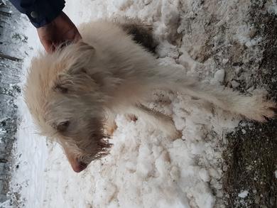 Найдена собака, фото 4