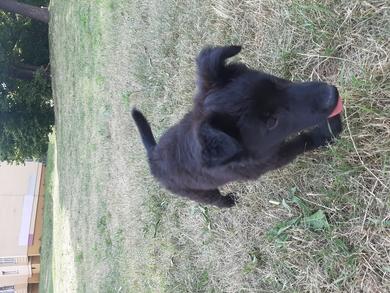 Найден щенок, фото 3