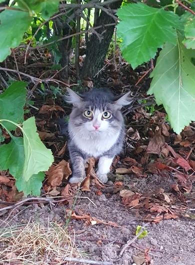 Найден кот (кошка)