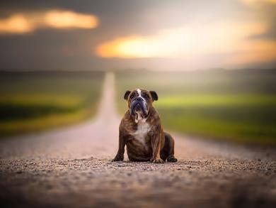 Авария на дороге: как помочь собаке?