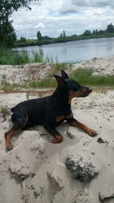 Борисов потерялась собака, фото 4