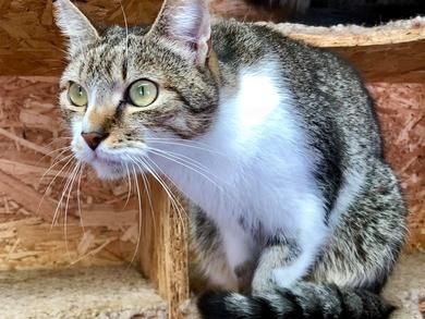Кот Джентельмен в дар!, фото 2