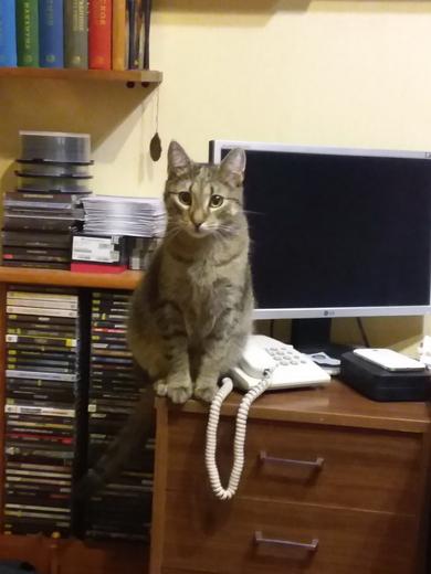 В Уручье потерялся кот, фото 2