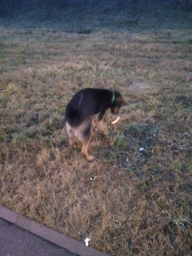 Найдена собака с зеленым ошейником , фото 2