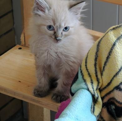 Красивые котята отдаются в хорошие руки, фото 2