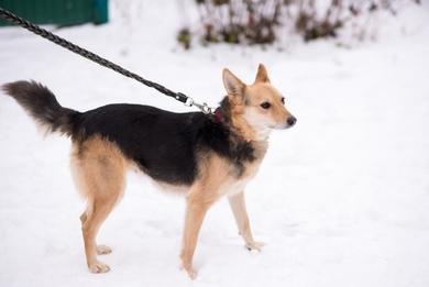 симпатичная собачка ищет дом, фото 2