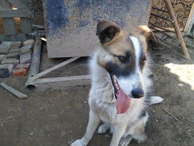 Рокс пес-подросток ищет новую семью, фото 2