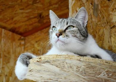 Кот Джентельмен в дар!, фото 4