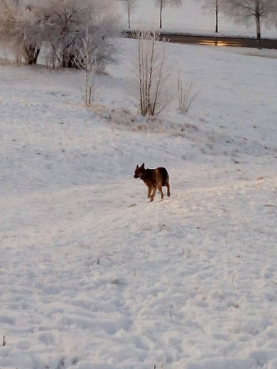Найдена собака ул.Янковского около школы 6
