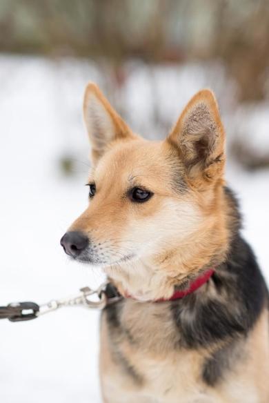 симпатичная собачка ищет дом, фото 3