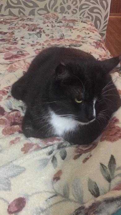 Пропал кот черный фото внутри колодищи Максима Танка 26, фото 2