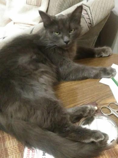 Найдена кошка, фото 2