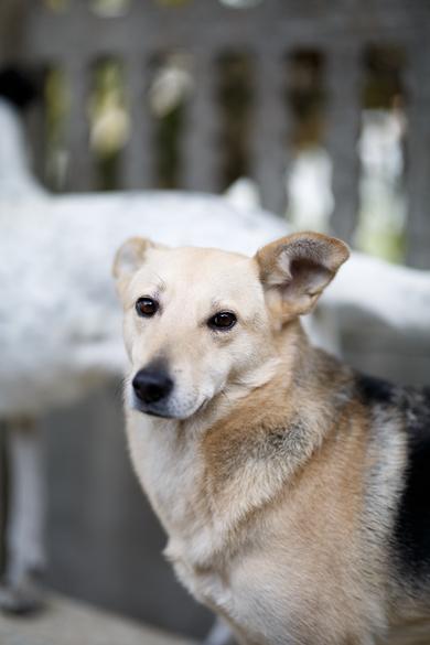 Обаятельная собачка в добрые руки!, фото 3