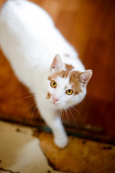 Очаровательный котик в добрые руки, фото 3