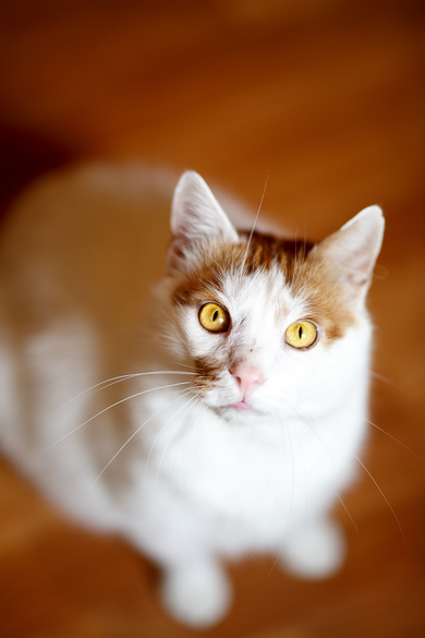 Очаровательный котик в добрые руки, фото 2