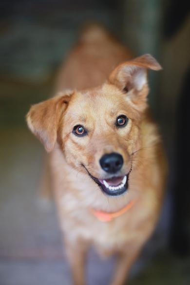 Молоденькая, стерилизованна собака ищет свою семью