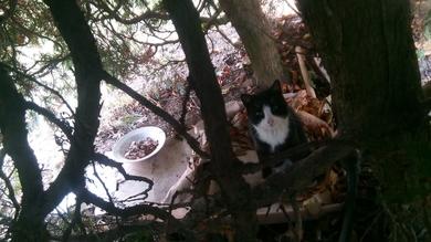 Найден кот черный с белым Курасовщина, фото 2