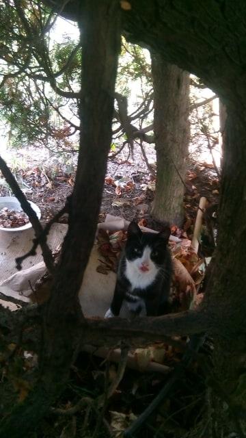Найден кот черный с белым Курасовщина