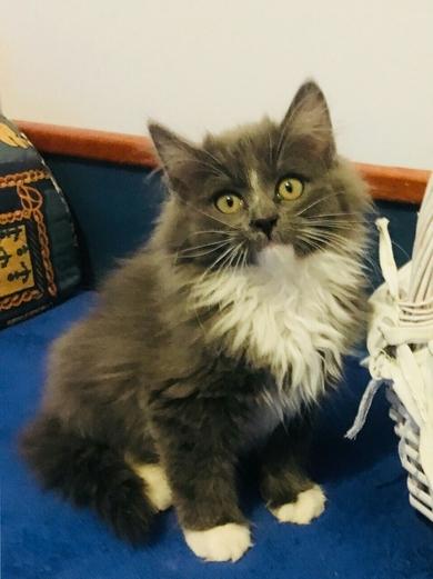 Очень красивый котенок в дар