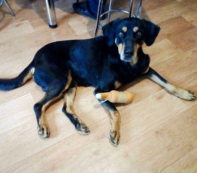 Очень срочно собаке нужна передержка или дом собаке, фото 2